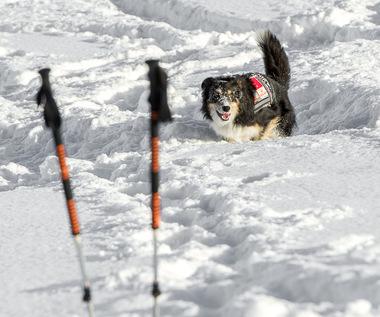 """Prawie 2000 czworonogów pracuje w służbach. """"Psy nas bronią, ratują i bawią"""""""