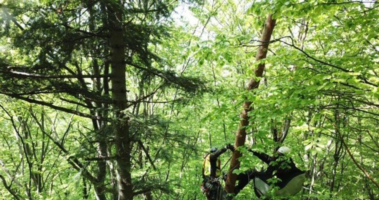 Cztery akcje GOPR. Paralotniarz zawisł na drzewie